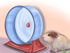 v4-728px-make-sure-your-guinea-pig-is-happy-step-9.jpg